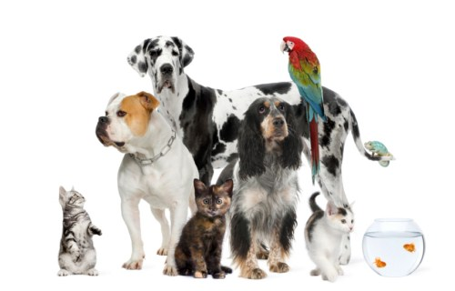 animal-behaviour