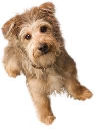 pet doctor vet healthy dog