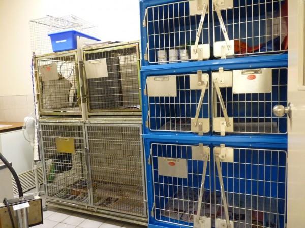 Pet Doctor Animal Ward