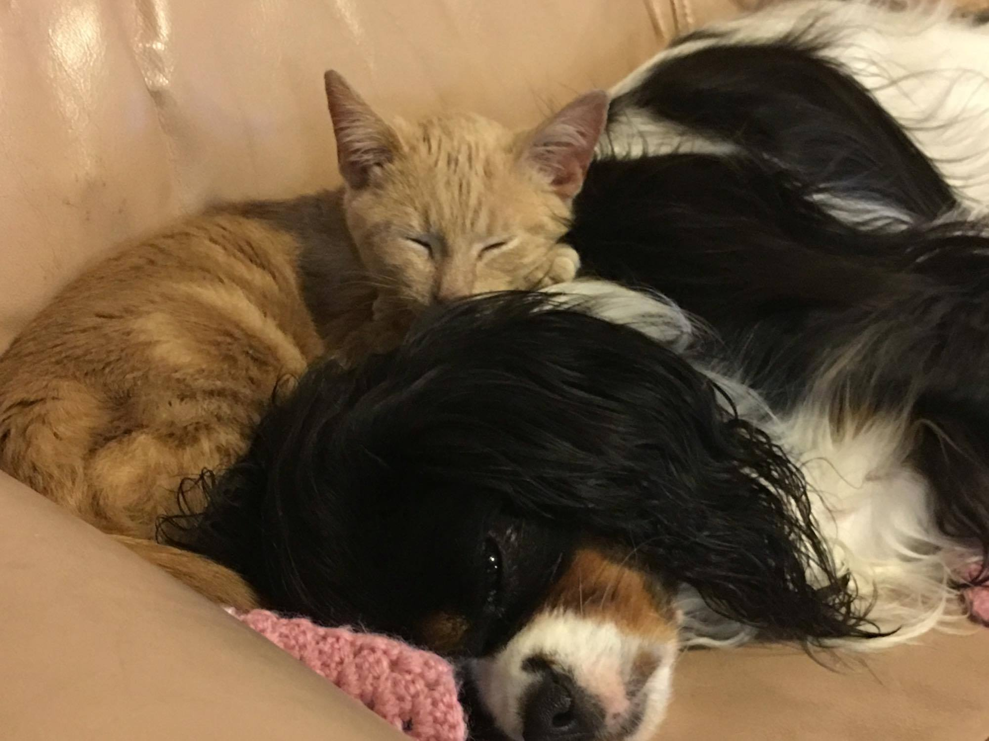 Dog and cat sleeping on a couch