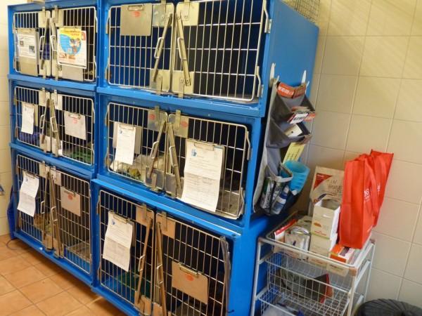 Pet Doctor Adelaide cat ward