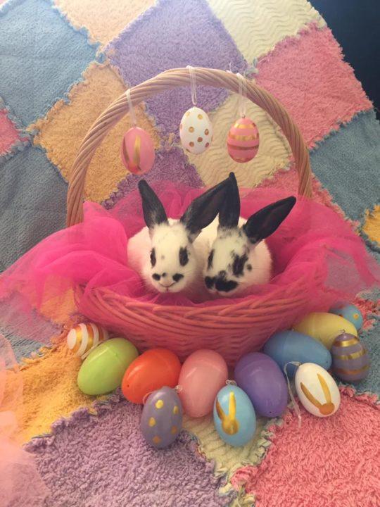 Clover & Nettle the Adelaide Easter rabbits