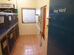 Pet Doctor Vet Dog Ward