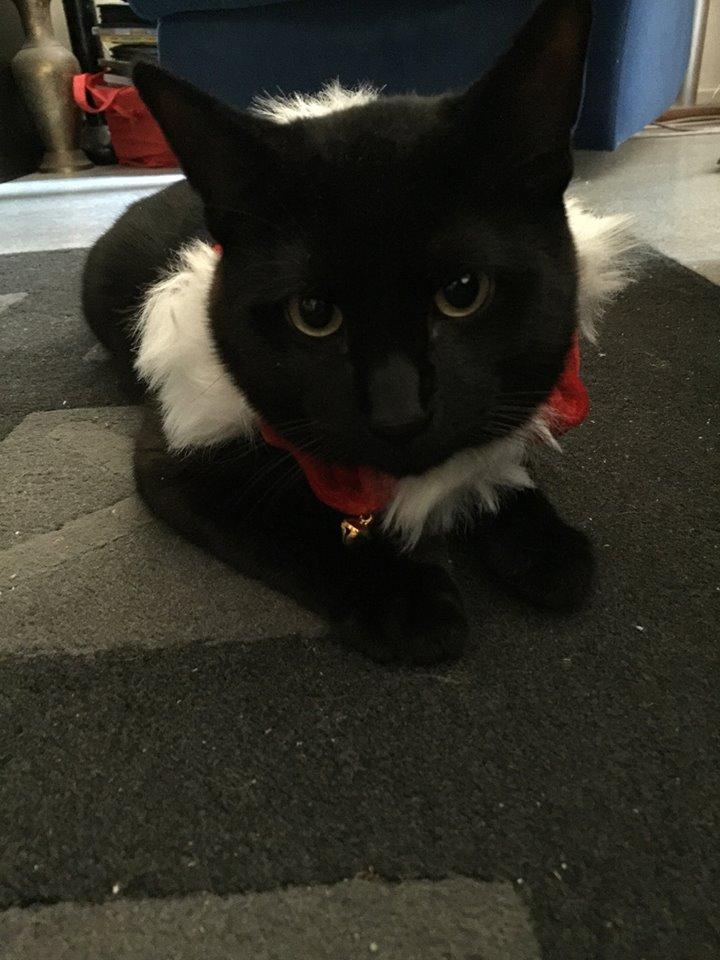 Eddie the black and white cat