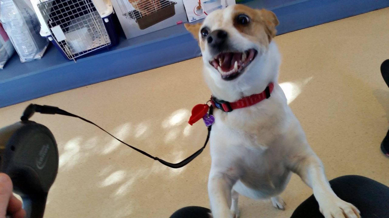 Layla the happy dog at Pet Doctor in Adelaide