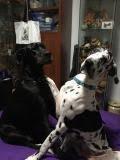 Odin & Dakota - Adelaide Pets