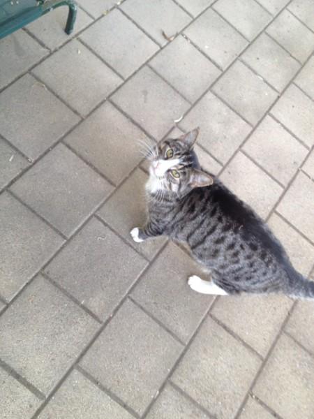 Possy the cat