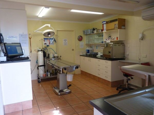 Pet Doctor Preparation and Treatment Room