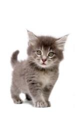 Kitten being cute