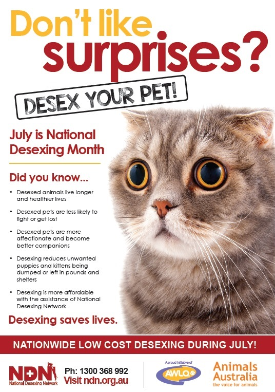 Desex your pet at Pet Doctor