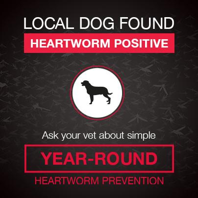 Heartworm positive alert