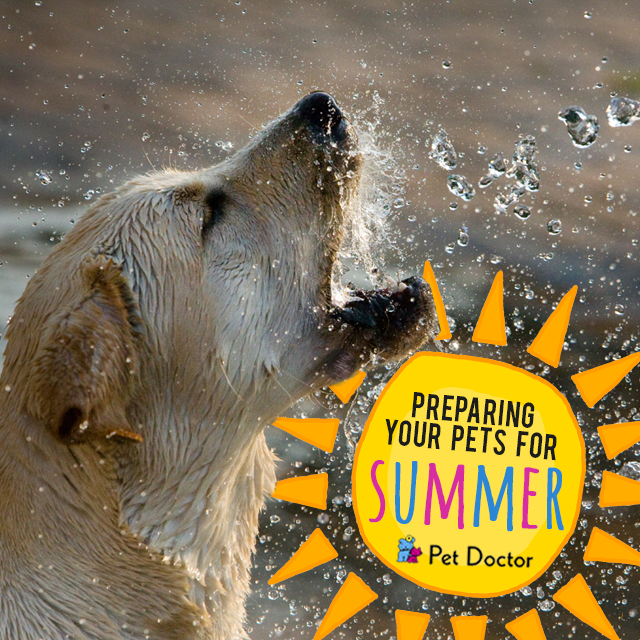 Prepare your pets for summer at Pet Doctor