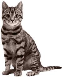 cat health pet doctor vet
