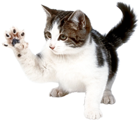 cat playful pet doctor vet