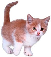 kitten pet doctor vet