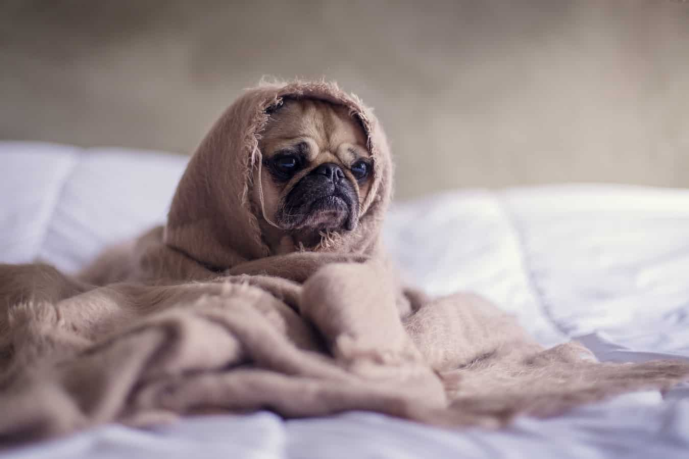caring for your pets during the cold winter in adelaide