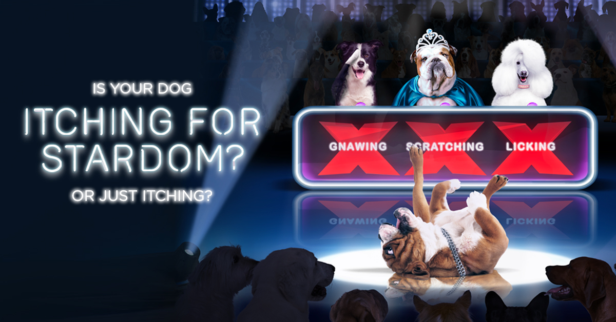 funny image of dogs as judges x factor