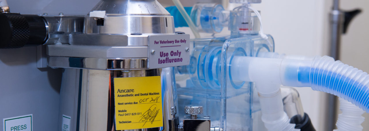 Anaesthesia machine for pets in adelaide