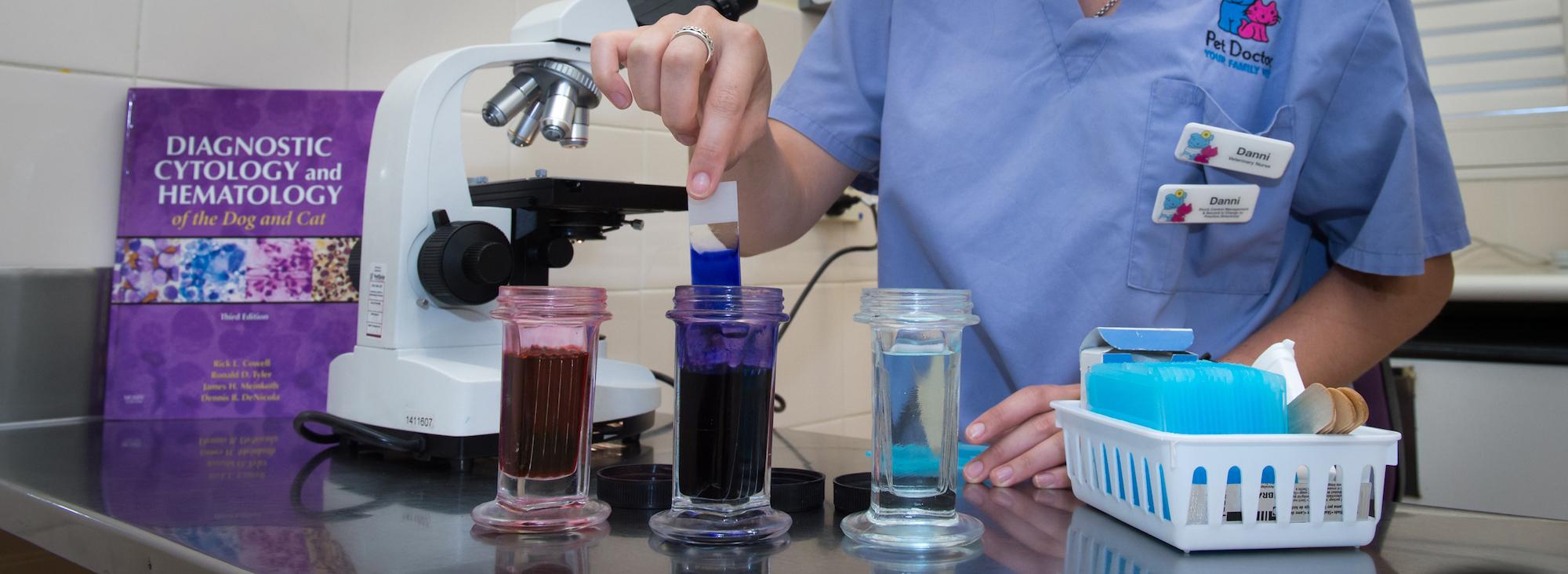 blood analysis at pet doctor vet
