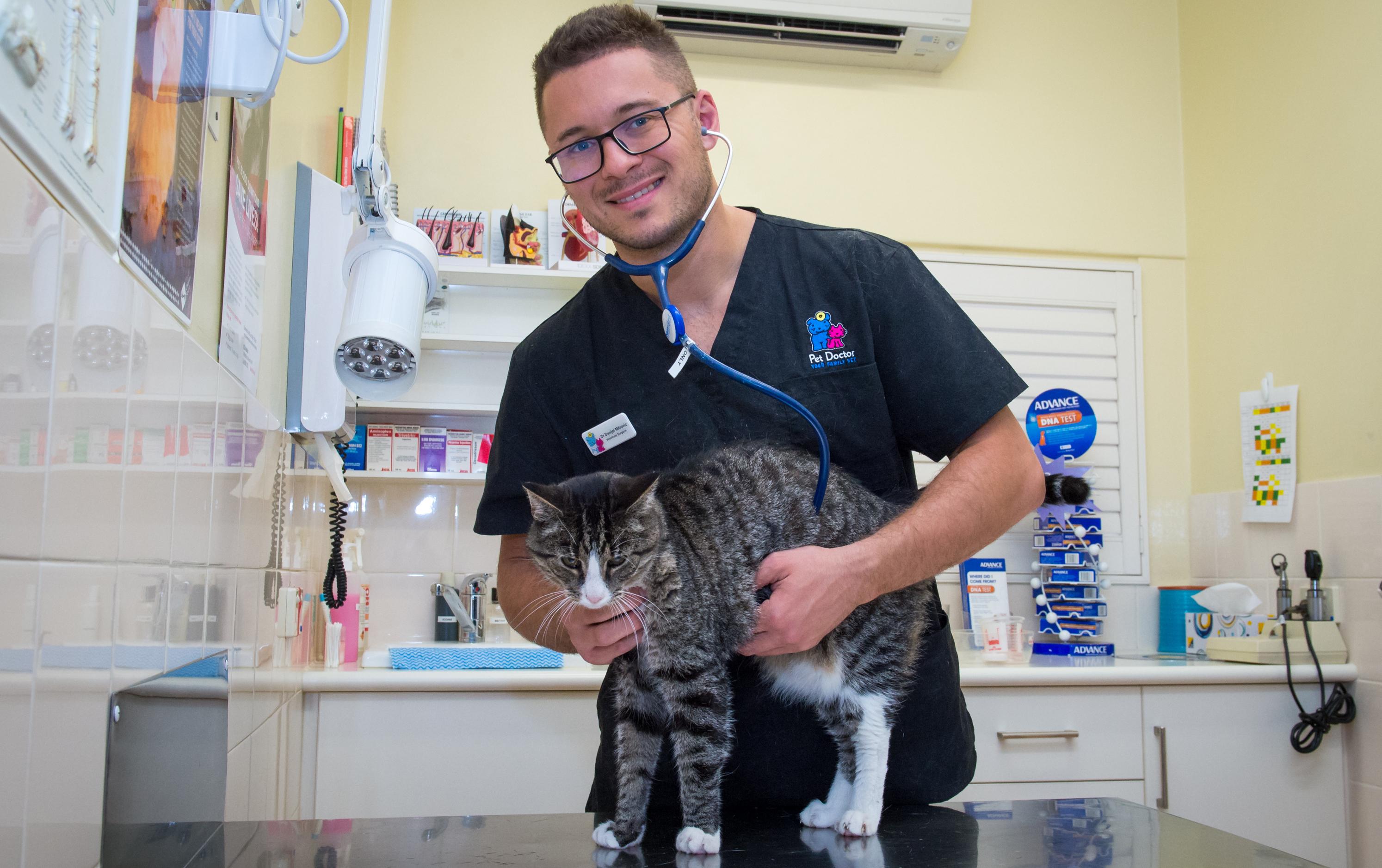 Vet treating cat