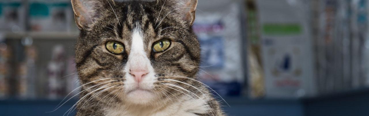 cat looking at vet