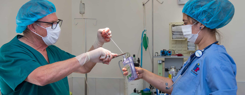 vet and vet nurse treating dog