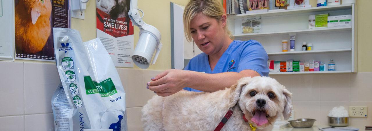vet nurse examining a dog