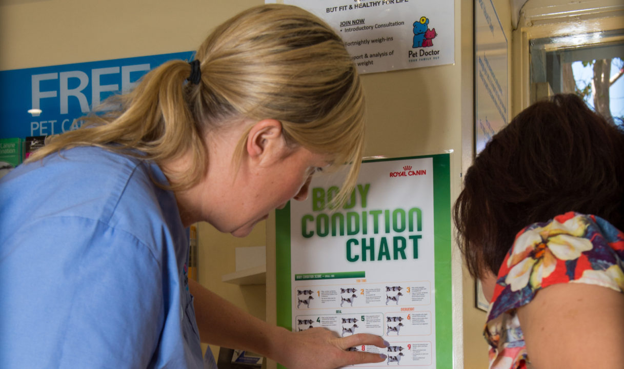 dog body condition chart with vet nurse