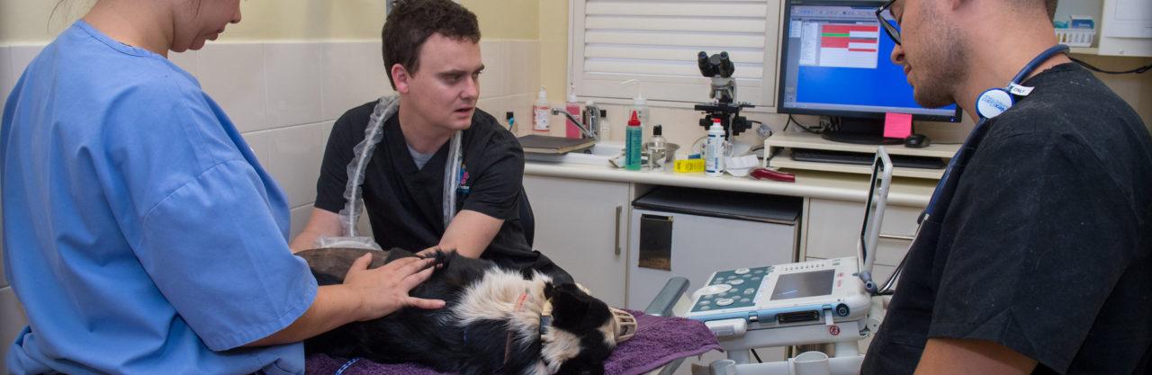 Vet and nurse treating a dog